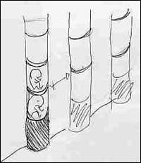 Desenhos de Carta Batista